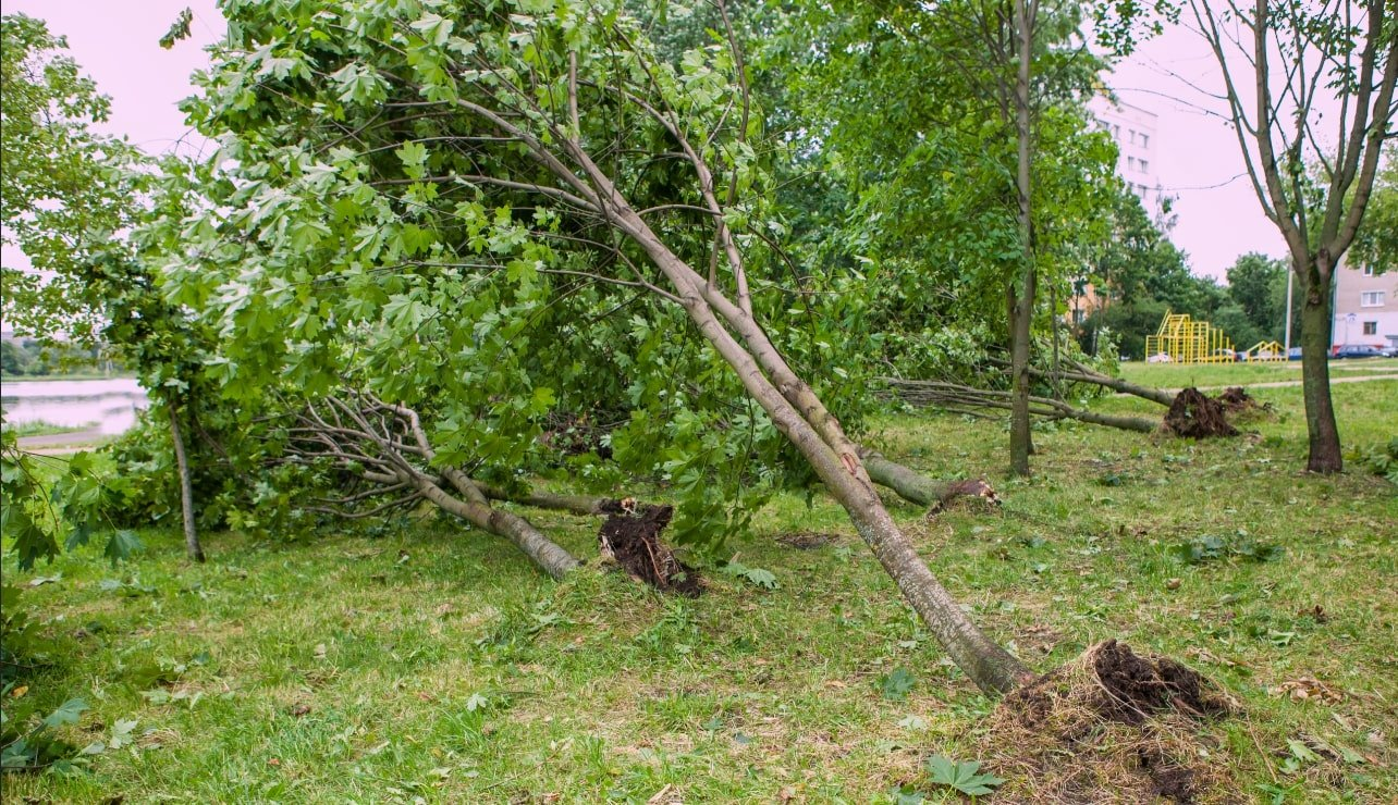 trees blown down by tropical storm